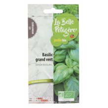 Basilic grand vert 0,5g - Ocimum basilicum L.