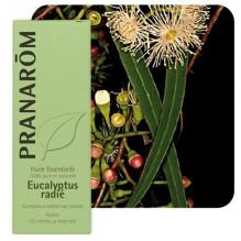 Huile essentielle d'Eucalyptus radiata - 10 ml