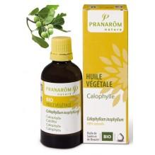 Huile végétale de Calophylle BIO - 50 ml