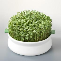 Coupelle de germination en céramique