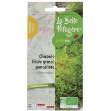 Chicorée grosse pancallière Frisée - Cichorium endivia L.