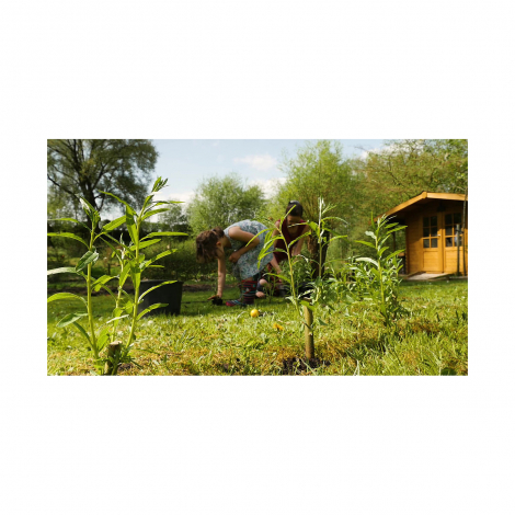 Ma cabane en saules - Kit de plantation