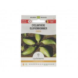 Cyclanthère Caigua - 20 graines